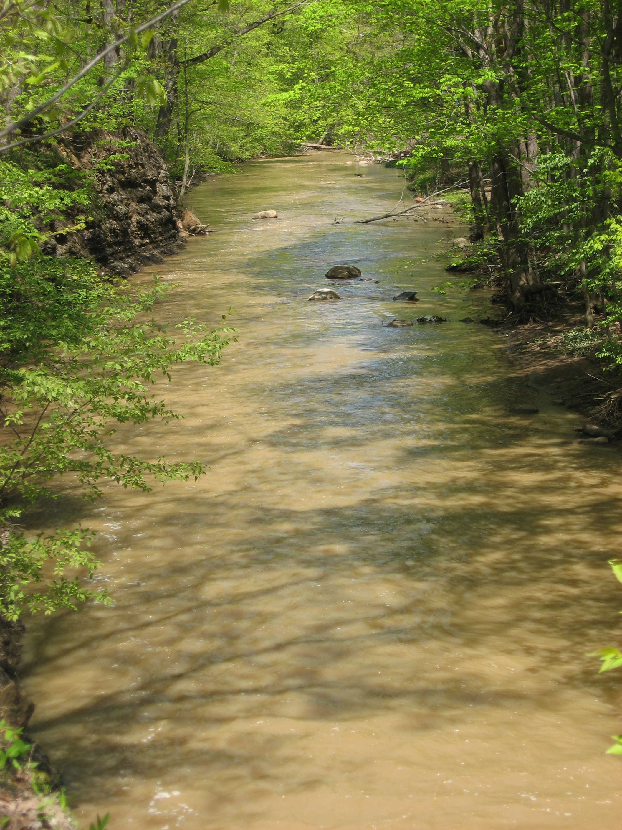 Beaver Creek at NIRM Wildlife Preserve