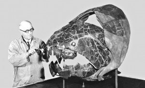 Peter Bungart, a friend of Col. Vietzen's, with the giant fish fossil he assembled, Dunkleosteus terrell.