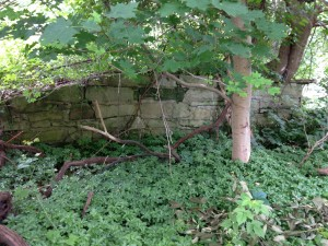 Remnant of stone-lined earthen ramp that led to the bank barn.